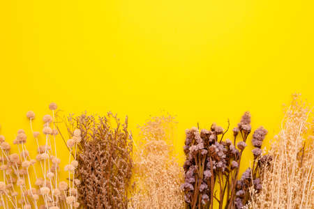 Top view dry color grass flower for interior decoration on yellow background. Studio shot with copy space for test or design
