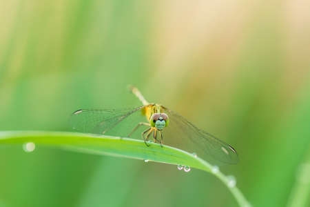 Macro dragonfly in nature on green blur background Stockfoto