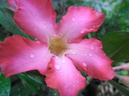 noun: Flower