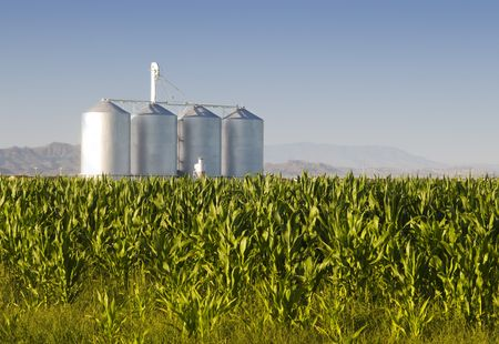 Corn crop with farm silos and mountains in background