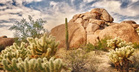 Beautiful desert landscape with Saguaro cacti and red rock buttes