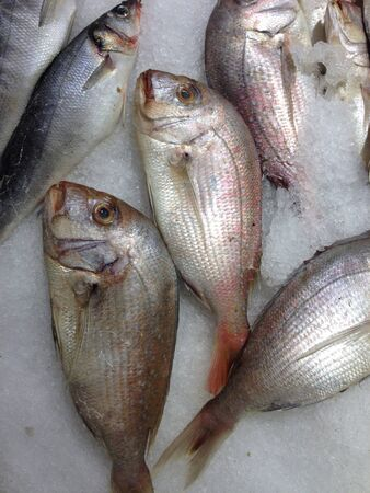 fish: Snapper Fish for sale