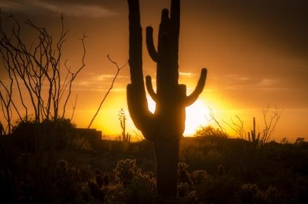 Puesta de sol sobre Phoenix con Saguro Cactus AZ