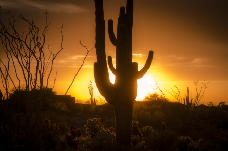 Sunset over Phoenix with Saguro Cactus AZ
