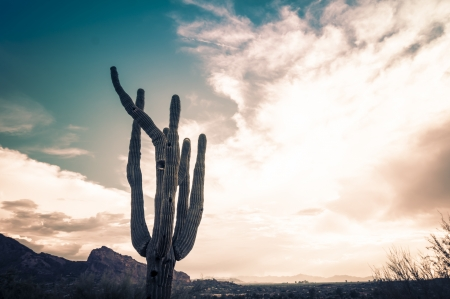 az: Iconic Saguaro Cactus and Camelback Mtn Phoenix, AZ Stock Photo
