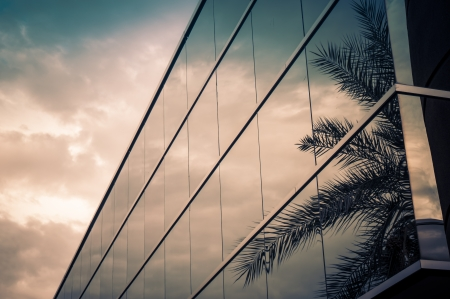 commercial real estate: Modern office building with palm tree reflecting in glass