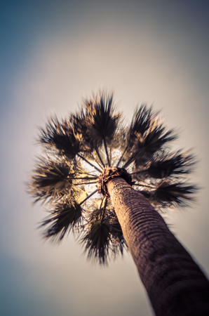 venice: Art lomography photo style photo of Palm Tree with the traditional charming  lomo soft focus blur associated with this type of craft