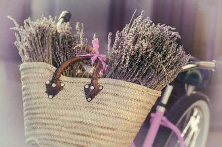 field of flower: Lavanda in cestino sulla bici in Toscana Francia Archivio Fotografico