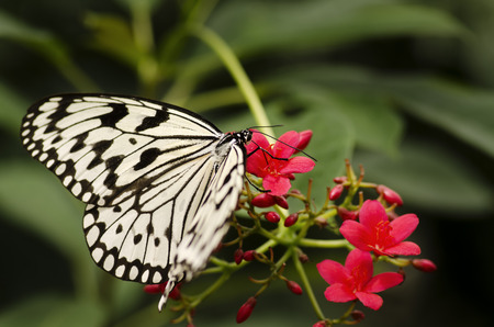 Butterfly resting on flower   Spring is here  photo