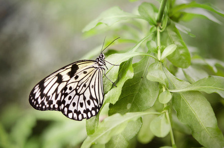 nature photography: Butterfly resting on flower   Spring is here