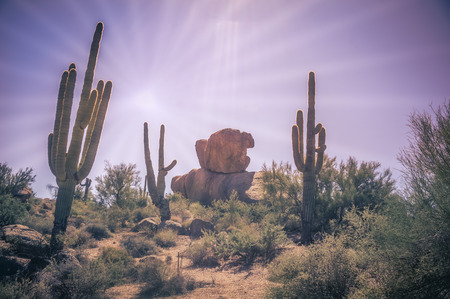 Sun beating down on desert saguaro cactus landscape
