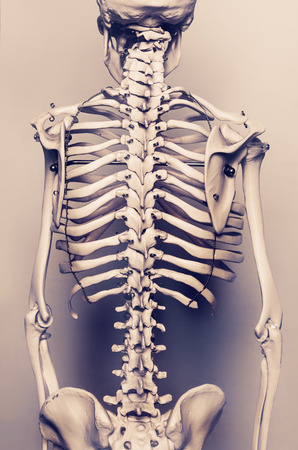 human backache: Stylized background photo of back of human skeleton model - aged effect Stock Photo