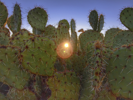 Desert saguaro cactus beautiful sky nature Arizona background Stock Photo