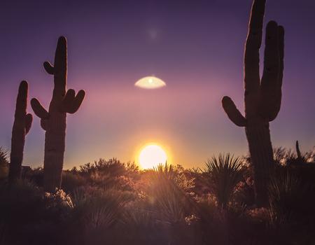 cactus: Desert saguaro cactus beautiful sky nature Arizona background Stock Photo