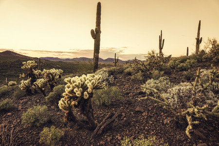 arizona landscape: Arizona desert landscape scene Stock Photo