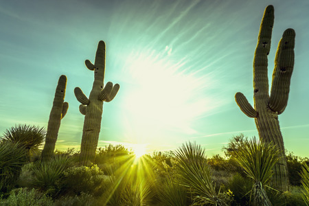 Desert saguaro cactus beautiful sky nature Arizona background Zdjęcie Seryjne