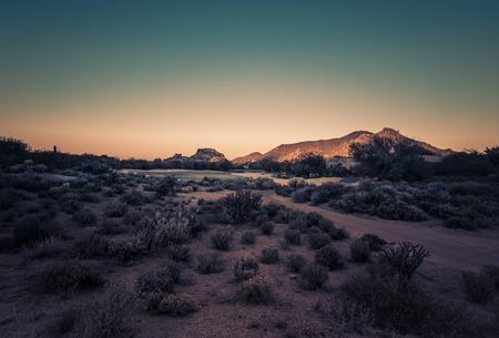 tuscon: Beautiful desert landscape