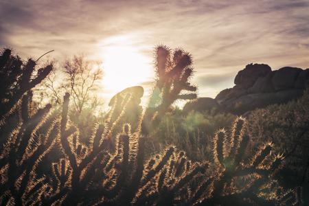 tuscon: Dry hot desert landscape scene - brittle bush cactus mountain