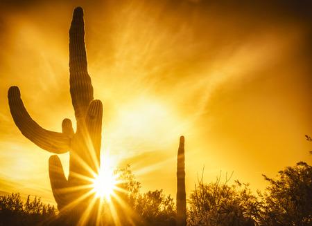 ave fenix: Saguaro Cactus árbol de la puesta del sol sobre el desierto de Scottsdale, Arizona, EE.UU.