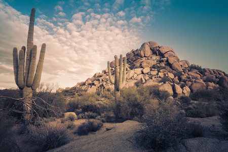 sonoran: Desert landscape in Scottsdale, Phoenix, Arizona area - Image cross processed