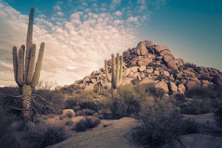 Woestijnlandschap in Scottsdale, Phoenix, Arizona gebied - Afbeelding cross verwerkt