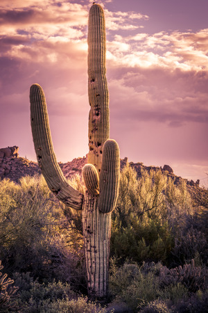 arizona sunset: Desert landscape mountains dramatic sky, Scottsdale,Arizona
