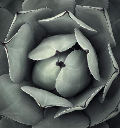 Cactus art portrait