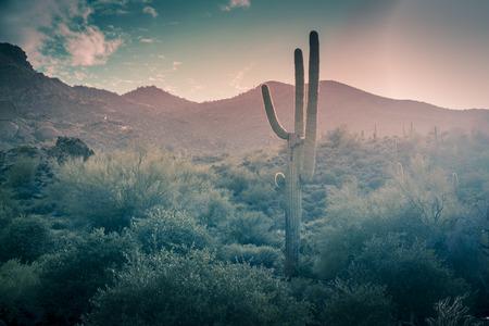 Desert landscape rare rainfall Scottsdale,Arizona,USA