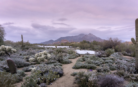 Early morning landscape scene of unusual desert winter snow scene in Scottsdale,Az,USA Stock Photo