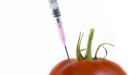 scientific farming: Genetically engineered food. Syringe needle inside tomato