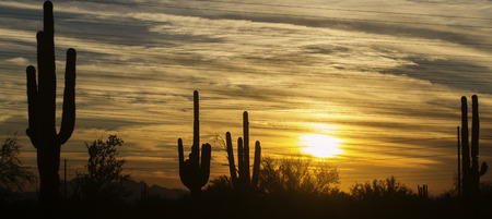 sunset clouds: Arizona desert landscape, Phoenix,Scottsdale area.