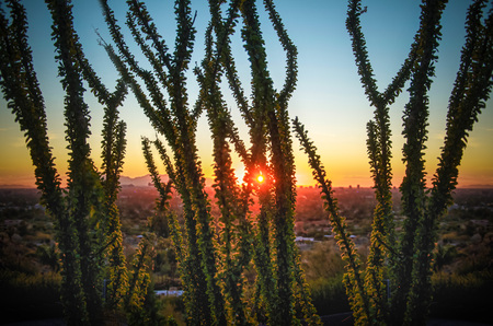 Serene iconic Arizona desert morning sunrise  brittle bush cactus