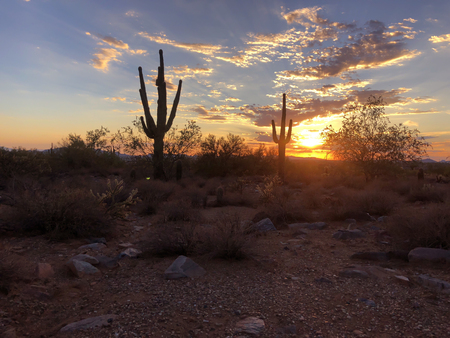 Sunset in Scottsdale, Arizona, Saguaro Cactus tree silhouetted bu glowing setting sun.