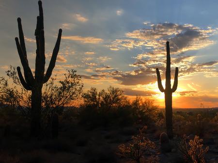 Sunset in Scottsdale, Arizona, Saguaro Cactus tree silhouetted bu glowing setting sun. Imagens - 115912194