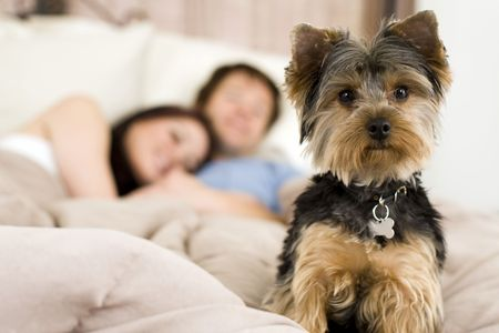 Happy couple laying in bed with their dog - focus on dog Stock Photo