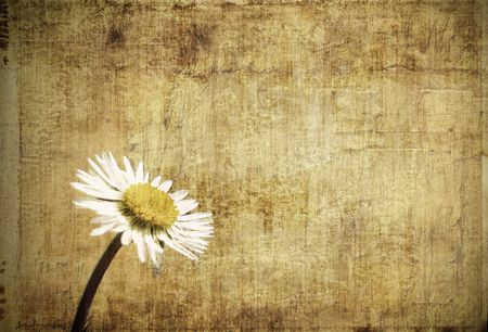 Grungy framed background with daisy