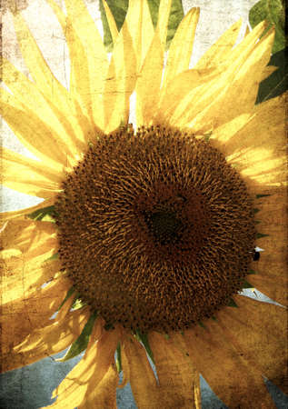 Grungy sunflower background image - cross processed photo
