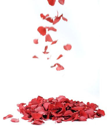 falling in love: Rose petals on a white background