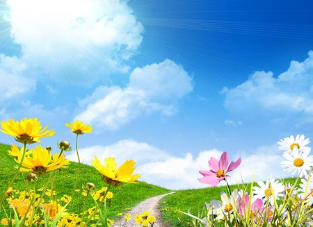 Spring flowers and a grassy meadow photo