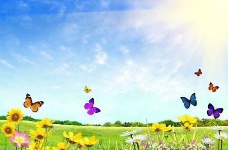Flowery terrain avec l'herbe et les papillons Banque d'images - 4999998