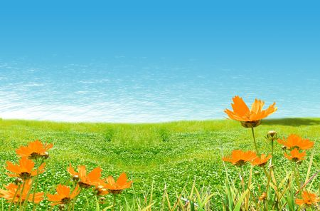 Champ fleuri avec de l'herbe et de l'eau Banque d'images - 5055655