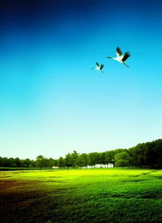 Landscape of a field with birds Stock Photo - 5085005
