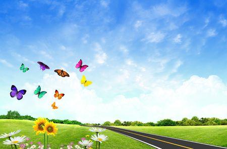 campo de margaritas: Campo florido con hierba y mariposas Foto de archivo