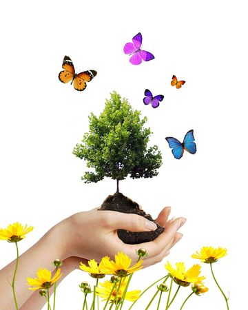 Hands holding dirt and a growing tree with butterflies and flowers