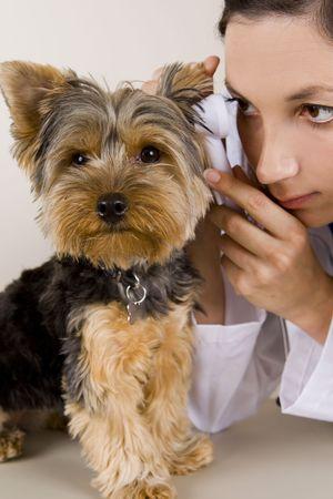 강아지에게 시험을주는 수의사