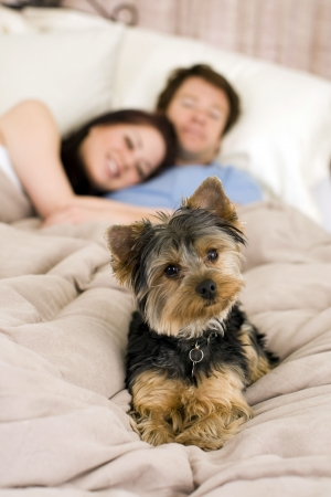 couple bed: Happy couple laying in bed with their dog - focus on dog Stock Photo