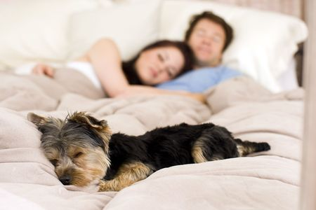 Happy couple laying in bed with their dog - focus on dog Stockfoto