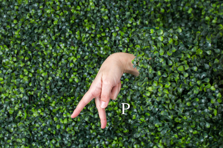 Sign Language Letter P made with hand against green plant background