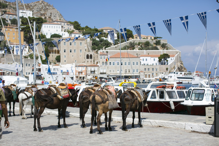 Horses standing by the pier on Hydra Island Greece