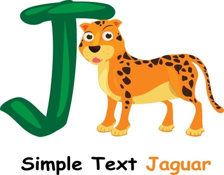 jaguar: ilustración de abc Vectores